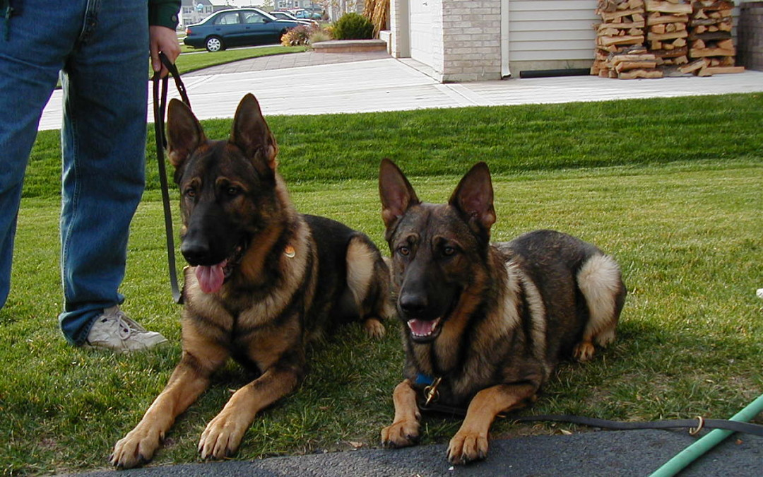 May 15, 2005-Greater Chicago Schutzhund Club-IL