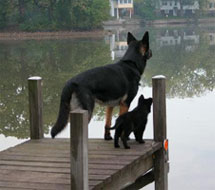 Landschaft German Shepherds